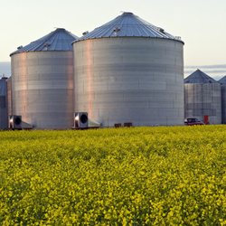 Producers Rushing to Sell Tough Grain
