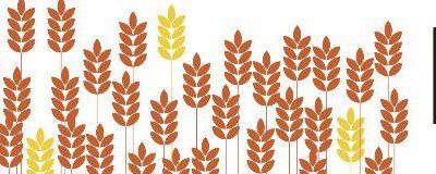 Wheat Midge Tolerance Gene Detected in Soft White Wheat