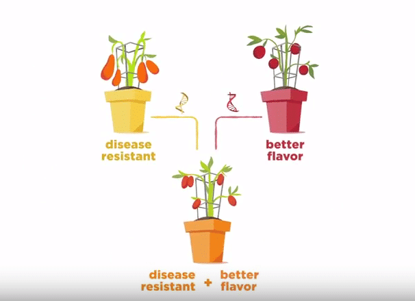 ASTA Launches Plant Breeding Animation Video - The Alberta Seed Guide