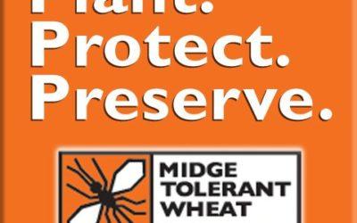 Midge Tolerant Wheat Stewardship Goes Online