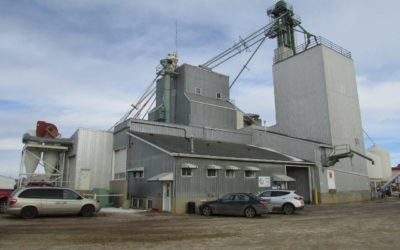 Alberta's First Seed Plant Doesn't Act Its Age