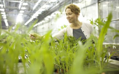 Uncovering a Genetic Mechanism to Enhance Yield Potential in Cereal Crops