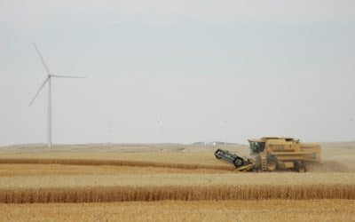 Wind Farms Positively Impact Crops, U.S. Study Says