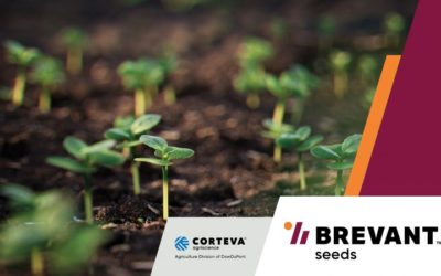 Brevant High-Yielding Canola Seeds Deliver Disease Resistance