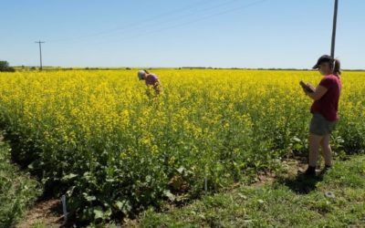 Is Intercropping the Future?