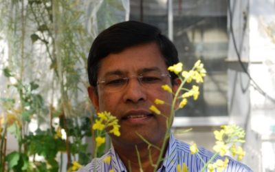 Canola Breeder Dedicated To His Craft: Dr. Habibur Rahman Has Made Significant Contributions To The Industry