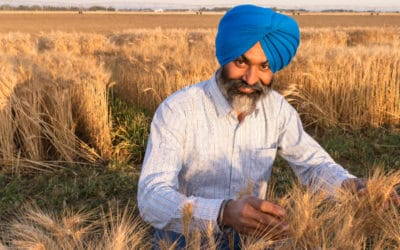 Wheat Breeder Continues Making Inroads