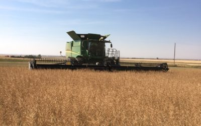 Getting the Most Out of Your Canola Crop: Three Reasons Why Pre-Harvest Aids and Straight Cutting Make Sense
