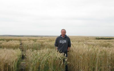 Triticale Is Holding Its Own Thanks To Alberta Agriculture And Forestry Plant Breeder, Mazen Aljarrah