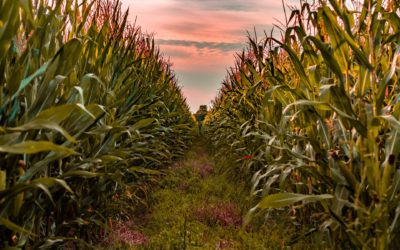 The Key to a Successful Corn Crop — Getting Off to a Good Start