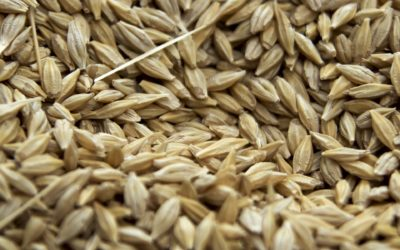 Canadian Seed Growers Association Members Vote No to Seeds Canada Merger