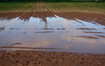 Storms Cause Excessive Moisture in Alberta Fields