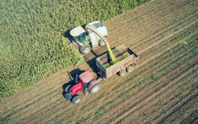 Silage or Grain: Decision Factors for End Use of Your Crop
