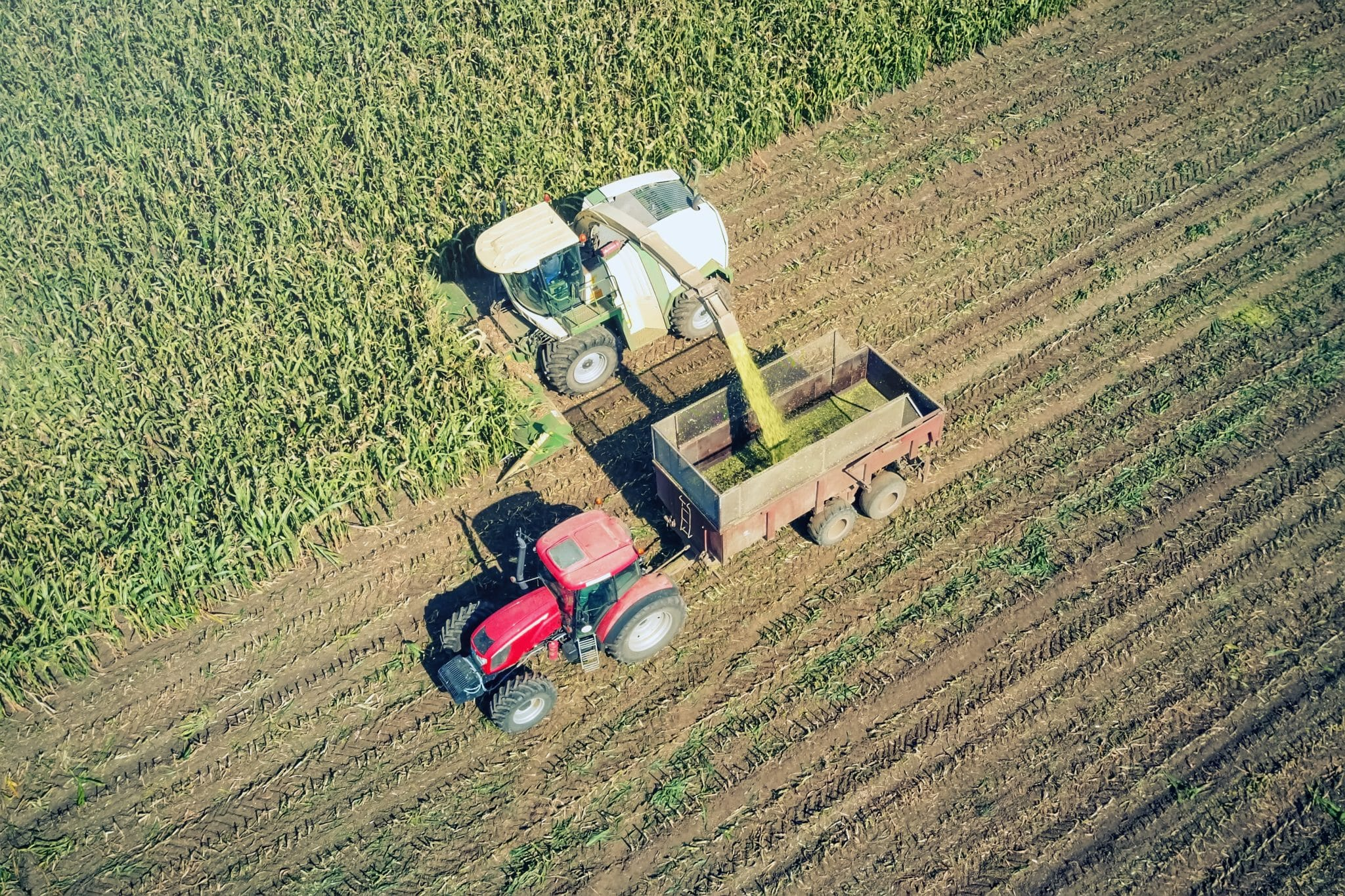 Agriculture cutting silage and filling trailer in field