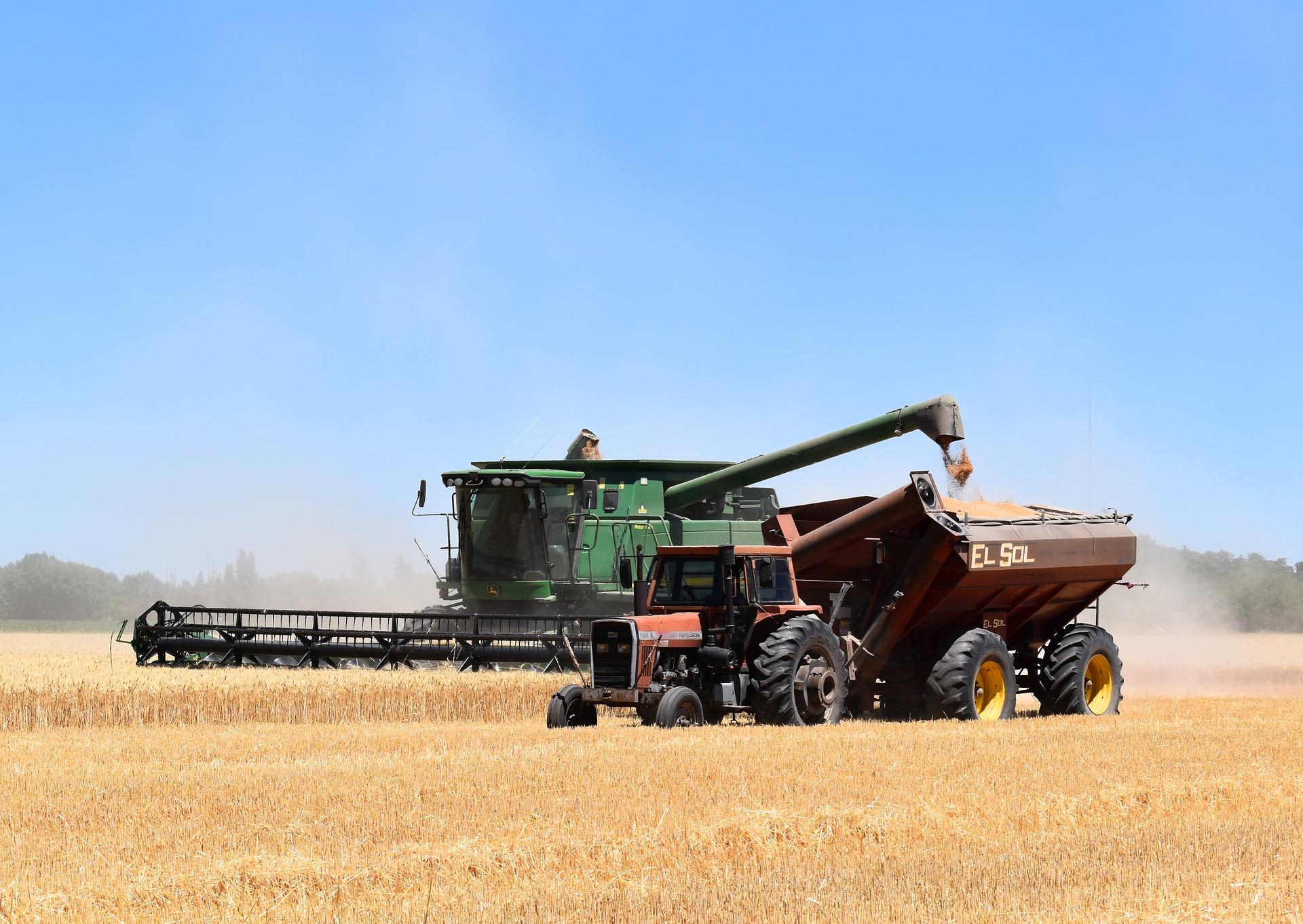 A combine harvests a crop