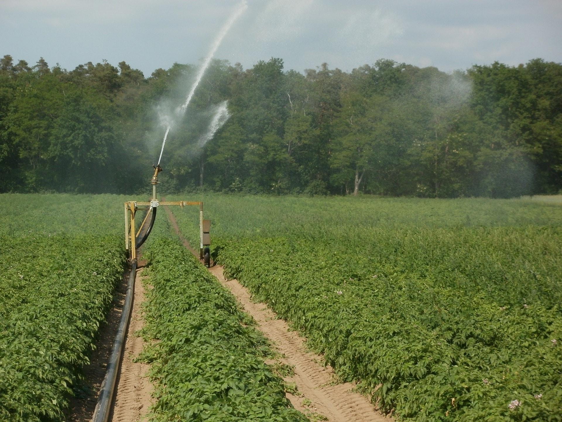 Potato field irrigation