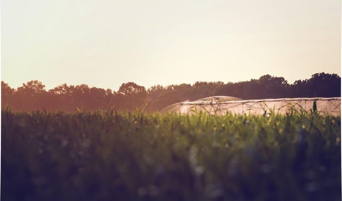 Irrigation at dusk