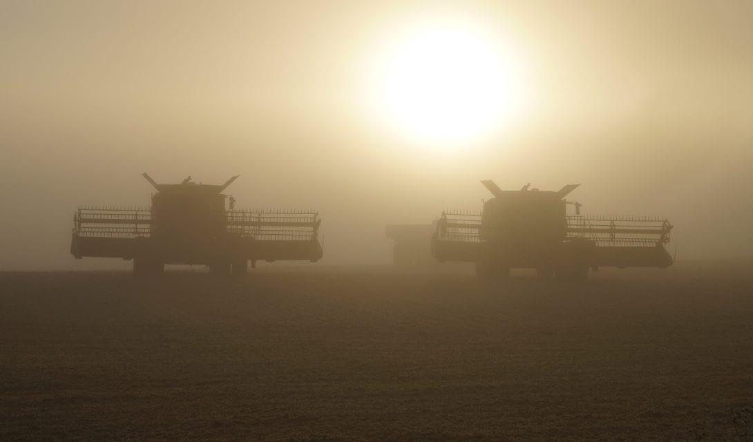 Dusk Harvest