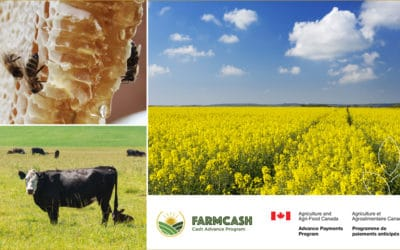 FarmCash: Cash Flow to Help You Grow