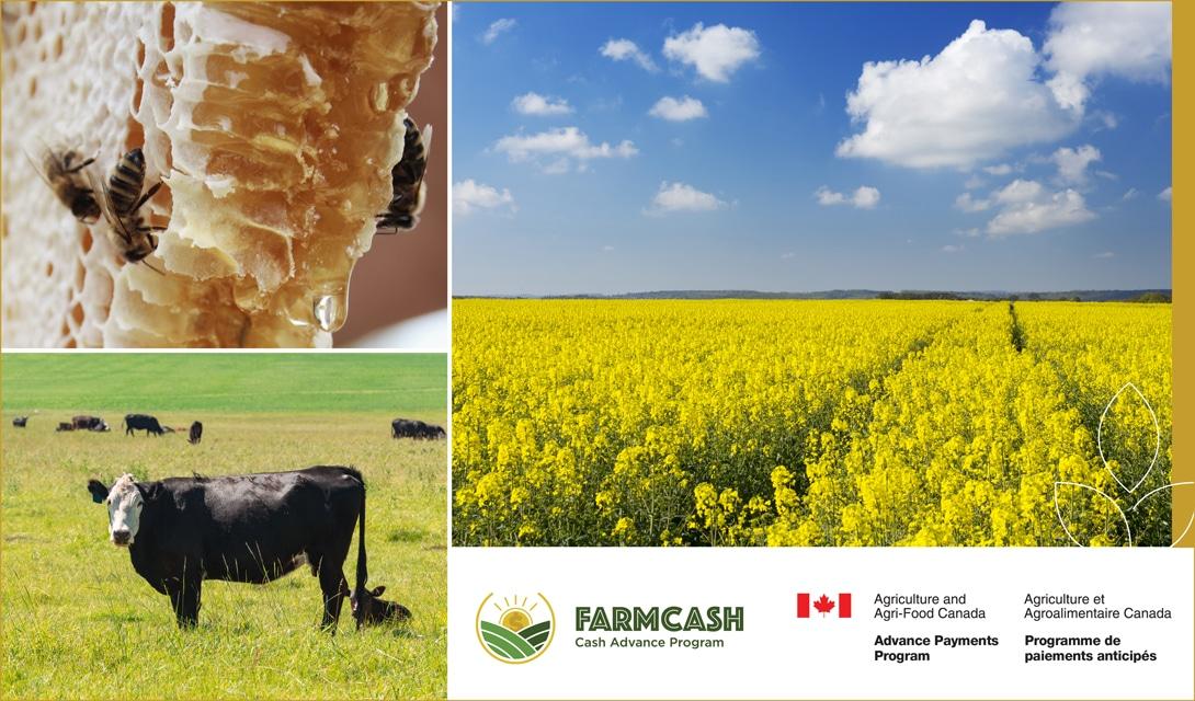 FarmCash