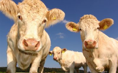 U of A Takes Over Some Alberta Livestock Research
