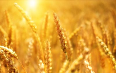 Grain Act Modernization Begins