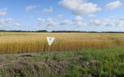 CWRC Gives $2 Million for U of A Wheat Breeding Program