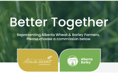 Alberta Wheat and Barley Launch New Website Together