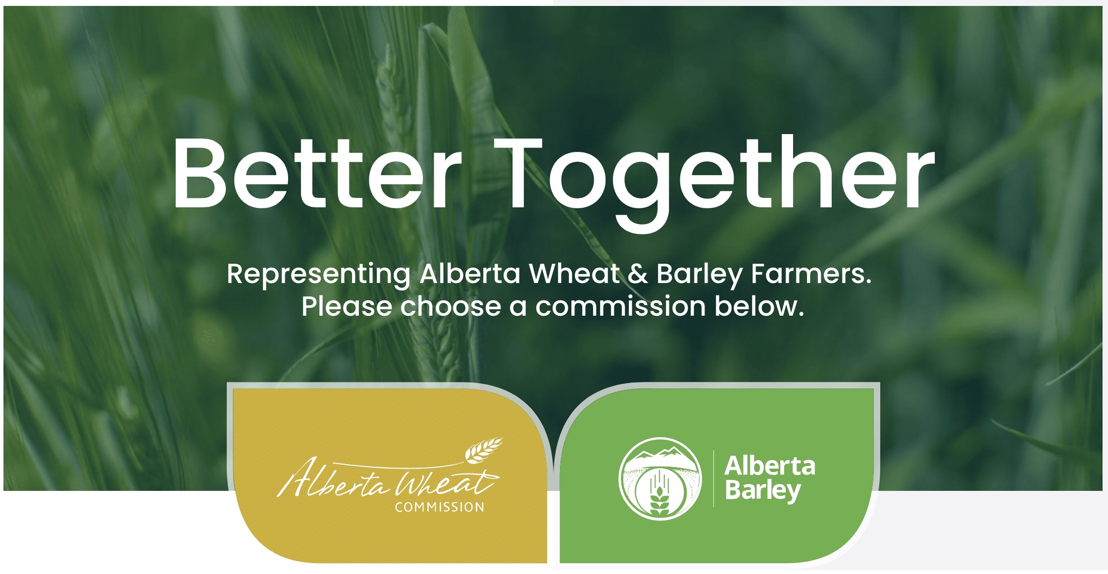Alberta Wheat and Barley commissions website