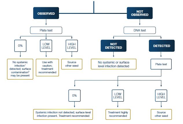 Fusarium testing diagram