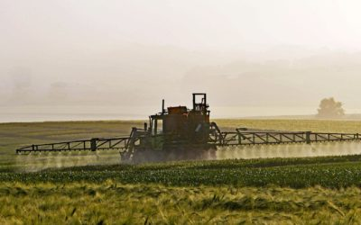 Neonic Imidacloprid Still Allowed for Use in Canada