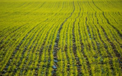 Strong Commodity Prices, Low Interest Rates Support Farmland Values