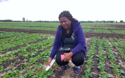 U of A Canola Researcher Using Sun to Increase Yields