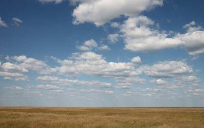 Alberta Crops Suffer from Ongoing Heatwave