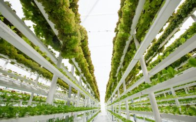 Vertical Veggies Mean Opportunities for Seed Companies are Sky-High