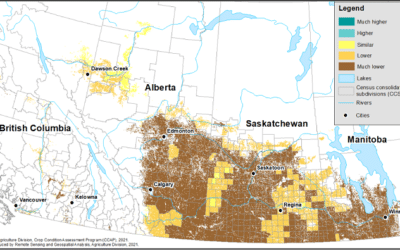 StatsCan Drops Wheat, Canola Production, Yield Expectations on Drought